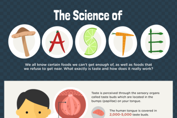 The Science of Taste (Infographic)