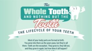 The Whole Tooth and Nothing But the Tooth The Lifecycle of Your Teeth