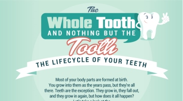 The Whole Tooth and Nothing But the Tooth: The Lifecycle of Your Teeth