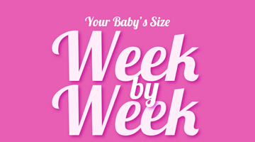 Your Baby's Size Week by Week