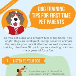 First Time Pet Parents Dog Training Tips