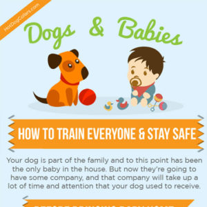 Dogs & Babies: How to Train Everyone & Stay Safe