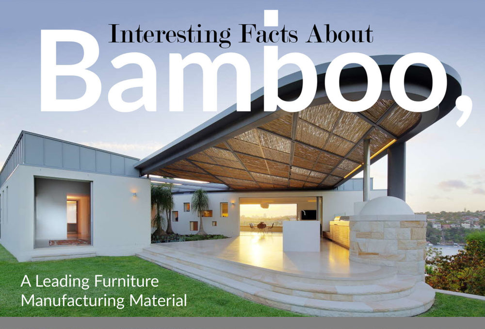 Interesting Facts about Bamboo, a Leading Furniture Manufacturing Material
