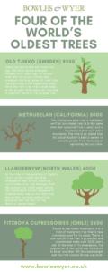 oldest trees