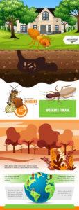 Amco-Ranger-Termite-Infographic