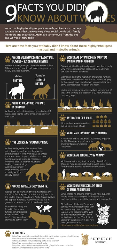 9 Facts You Didn't Know About Wolves