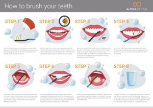 How to brush your teeth infographic - by Alpha Dental Perth